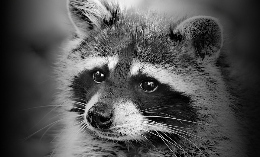 'Raccoon' Infostealer Now Targeting 60 Apps: Report